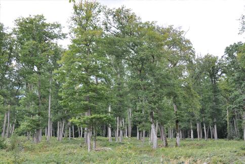 En el bosque de Troncais